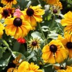 Ясная поляна - Имение Л.Н. Толстого - цветы на клумбе