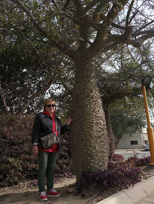Бутылочное дерево