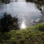 Ясная поляна - Имение Л.Н. Толстого - пруд